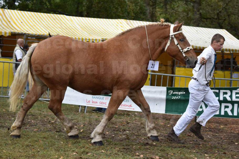 Concours Régional de chevaux de traits en 2017 - Pouliche Trait COMTOIS - EGLANTINE 28