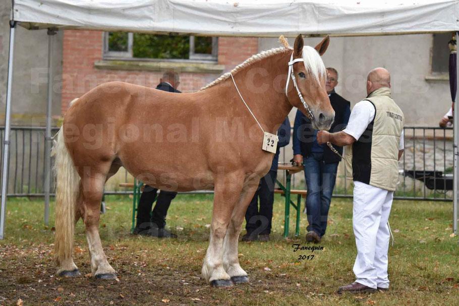 Concours Régional de chevaux de traits en 2017 - Trait COMTOIS - ELLA DE BELLER