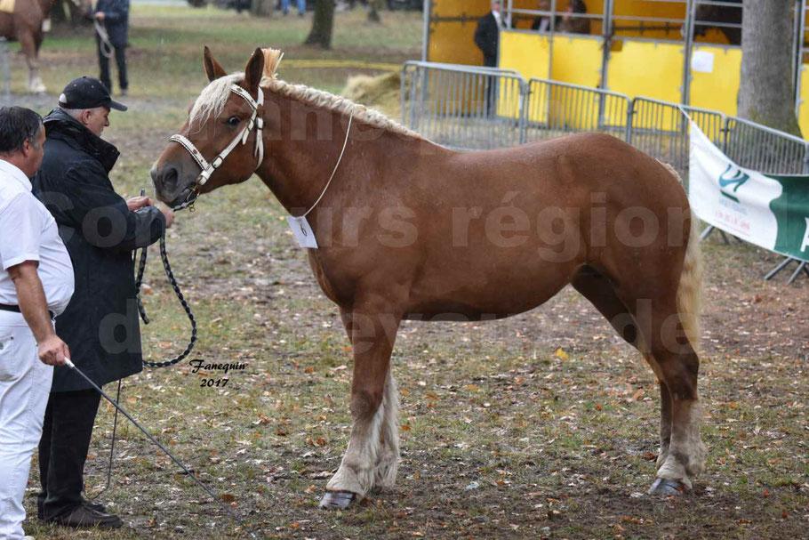 Concours Régional de chevaux de traits en 2017 - Trait COMTOIS - FANNY 61