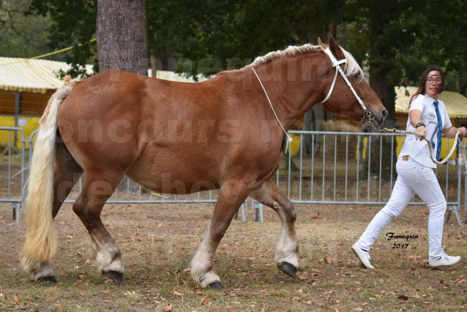 Concours Régional de chevaux de traits en 2017 - Jument & Poulain Trait COMTOIS - DAKOTA DU GARRIC