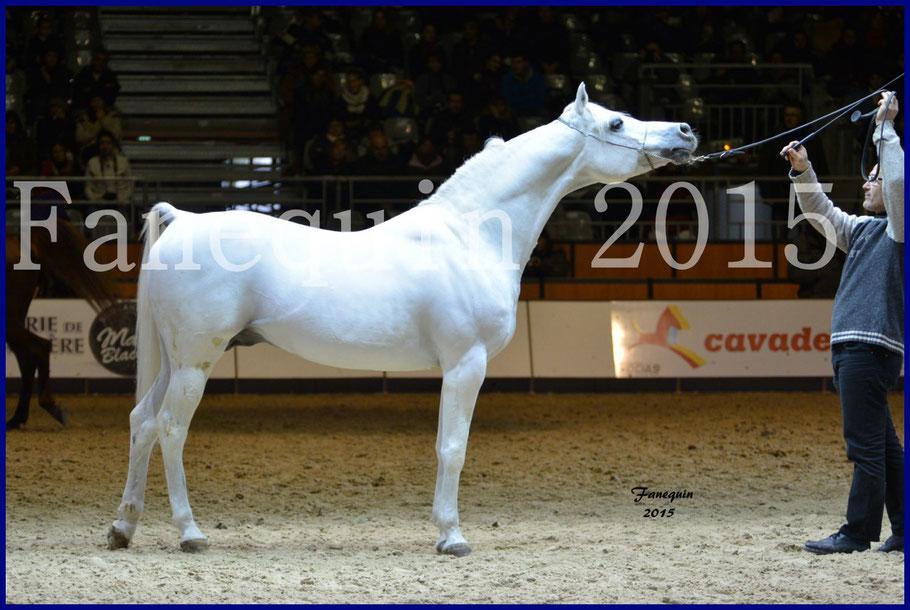 Cheval Passion 2015 - Cheval ARABE de show - ESTA ESPLANAN