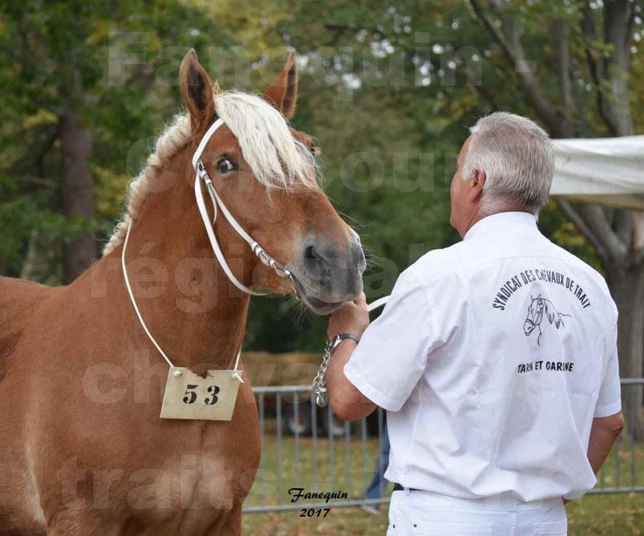 Concours Régional de chevaux de traits en 2017 - Jument & Poulain COMTOIS - BELLE DE RIGAIL