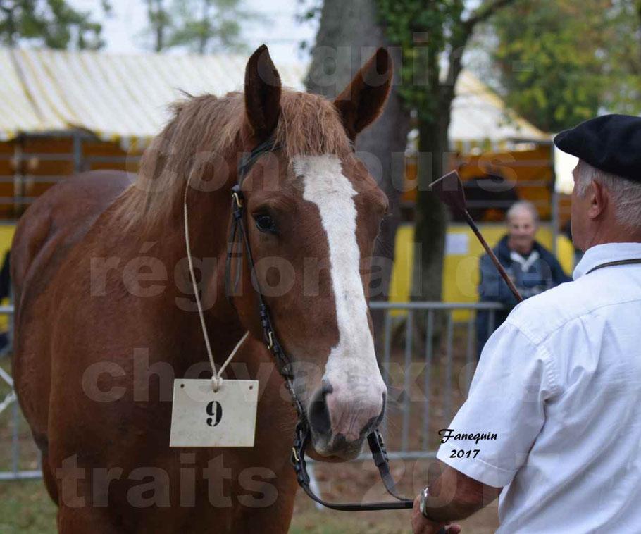 Concours Régional de chevaux de traits en 2017 - Trait BRETON - FIBULE DU VERDUS