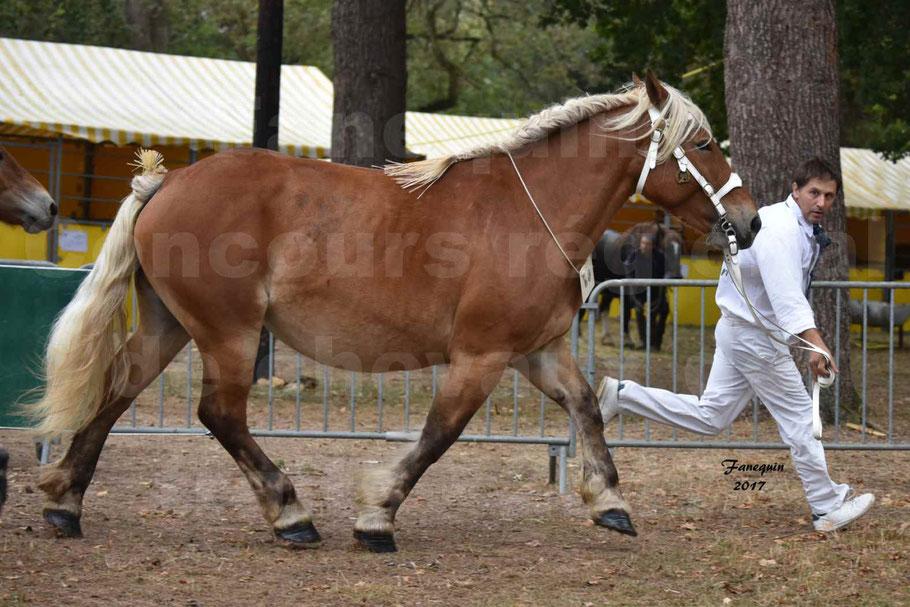 Concours Régional de chevaux de traits en 2017 - Jument & Poulain Trait COMTOIS - DIEZE DE GRILLOLES