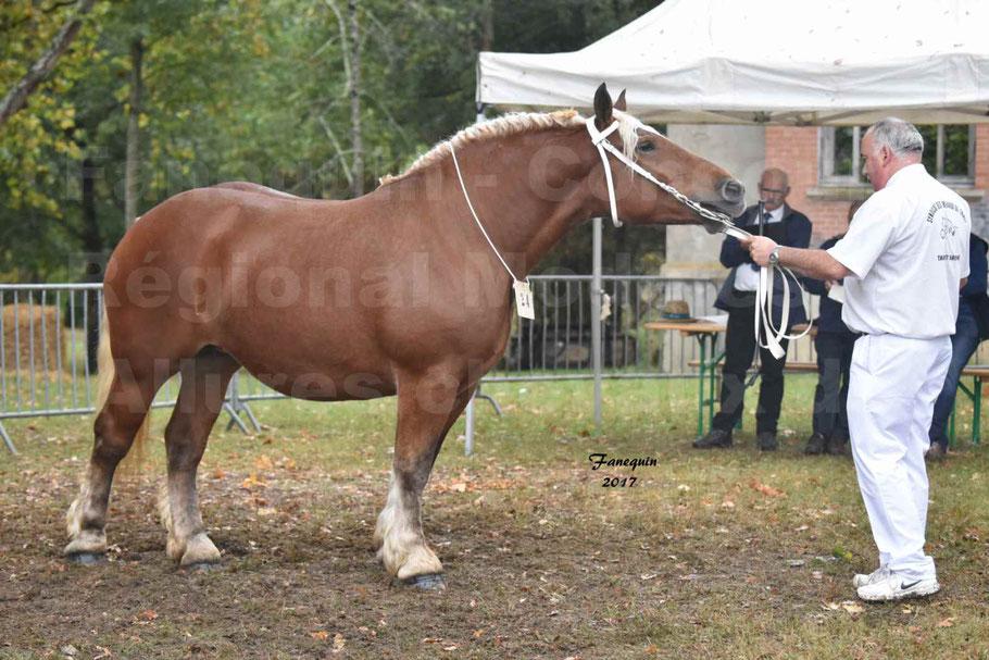 Concours Régional de chevaux de traits en 2017 - Trait COMTOIS - ETOILE DES NAUZETTES
