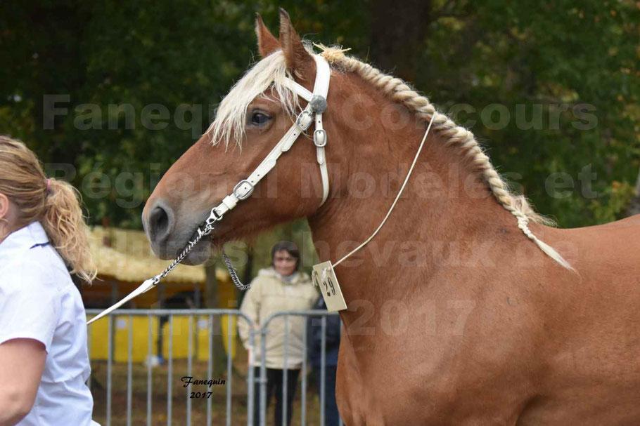 Concours Régional de chevaux de traits en 2017 - Trait COMTOIS - ELITE 14