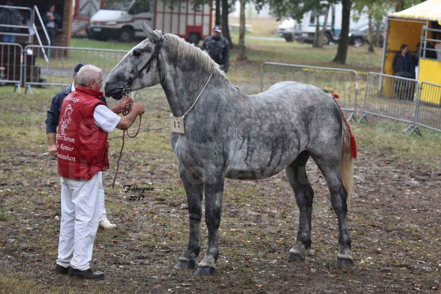 Concours Régional de chevaux de traits en 2017 - Trait PERCHERON - FRIANDISE DU RAMIER
