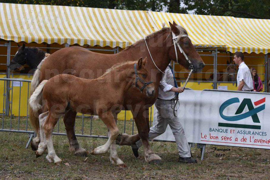 Concours Régional de chevaux de traits en 2017 - Jument & Poulain COMTOIS - ALLIANCE 3