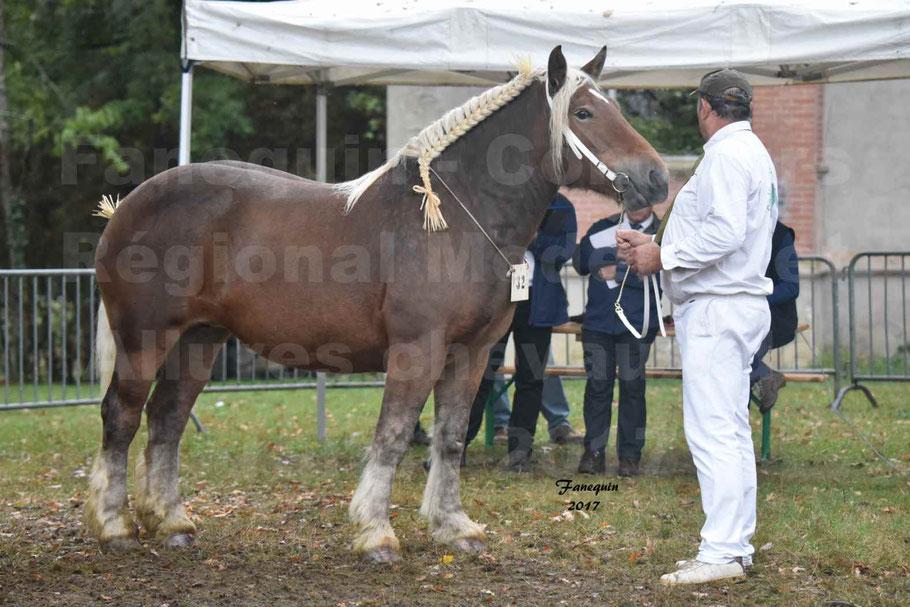 Concours Régional de chevaux de traits en 2017 - Pouliche Trait COMTOIS - ECLIPCE DE PIGASSOU