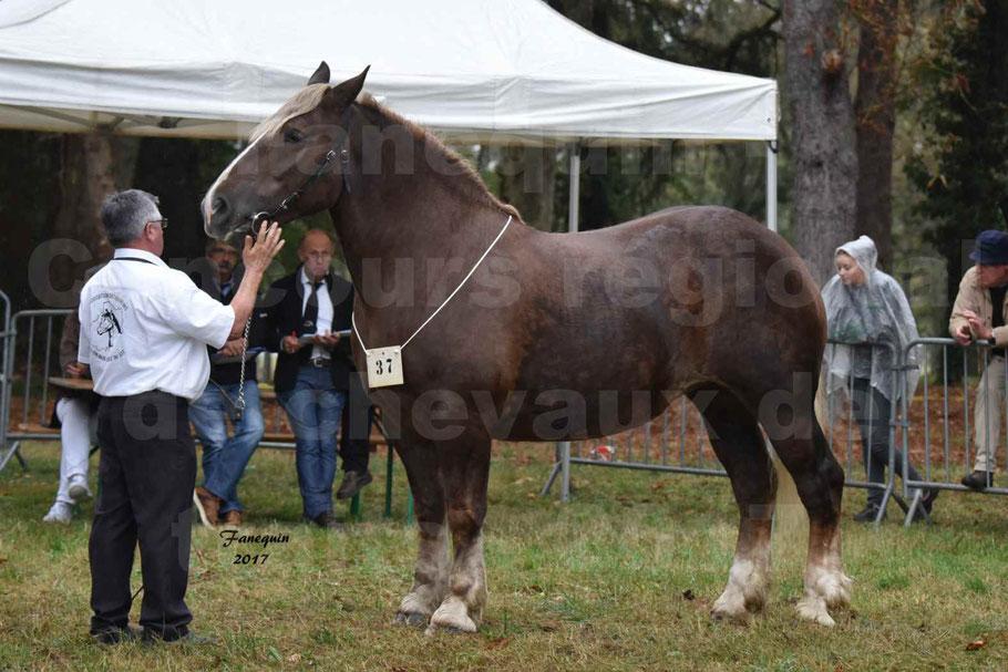 Concours Régional de chevaux de traits en 2017 - Trait BRETON - ELENNE DE TOU FOLL
