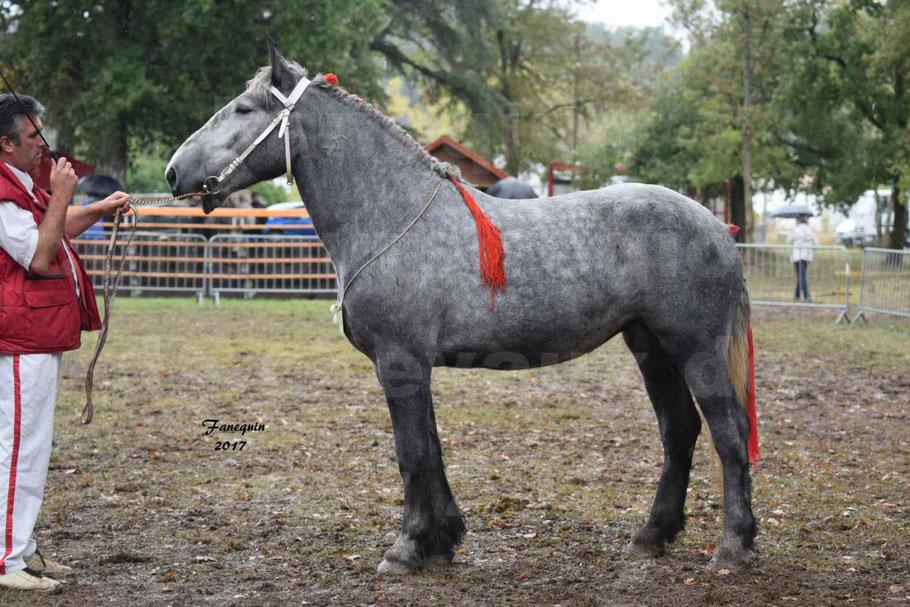 Concours Régional de chevaux de traits en 2017 - Trait PERCHERON - FANY DES COUSTAUSSES