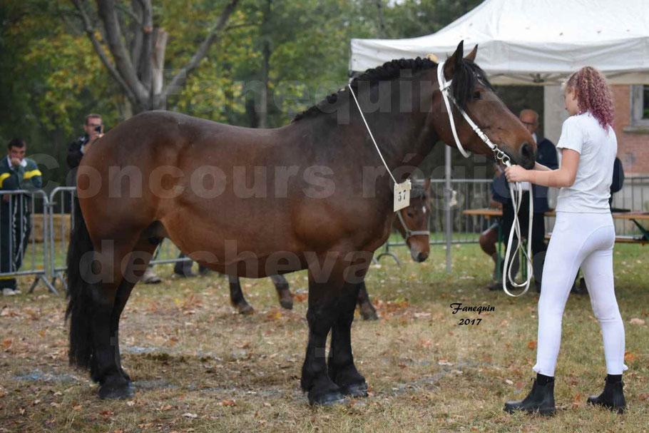 Concours Régional de chevaux de traits en 2017 - Jument & Poulain Trait COMTOIS - CANDY DE GRILLOLES
