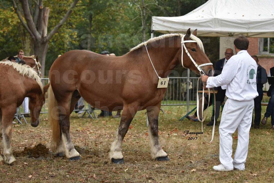 Concours Régional de chevaux de traits en 2017 - Jument & Poulain Trait COMTOIS - BESMA DE GRILLOLES