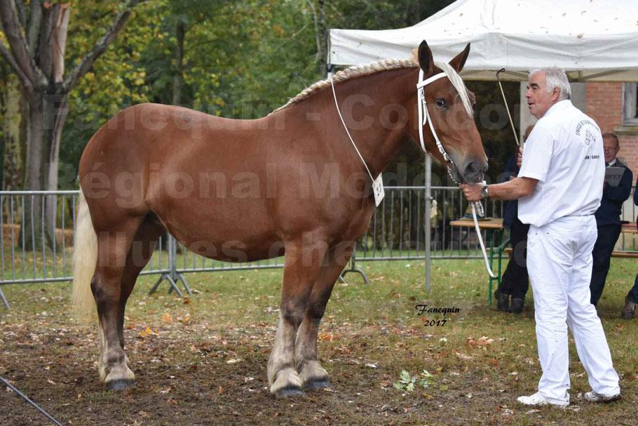 Concours Régional de chevaux de traits en 2017 - Trait COMTOIS - ELLIA DE FENEYROLS