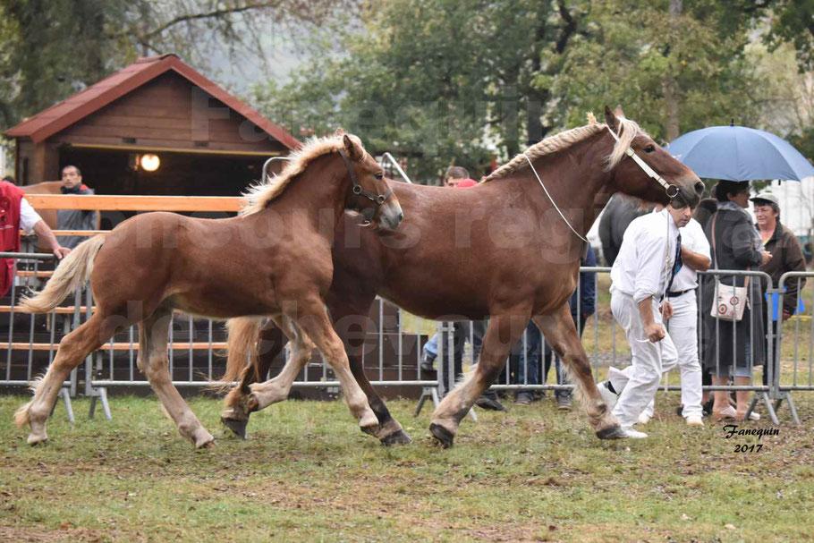 Concours Régional de chevaux de traits en 2017 - Jument & Poulain Trait COMTOIS - CHIPPIE 2