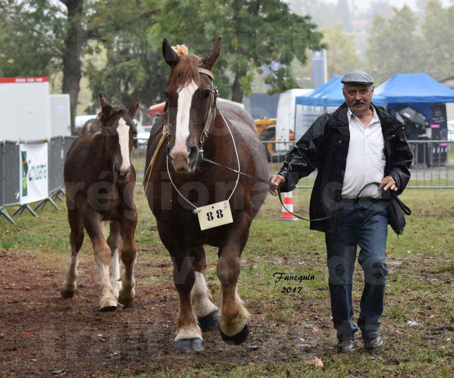 Concours Régional de chevaux de traits en 2017 - Trait BRETON - Jument suitée - SISIE DE LA GLEVADE