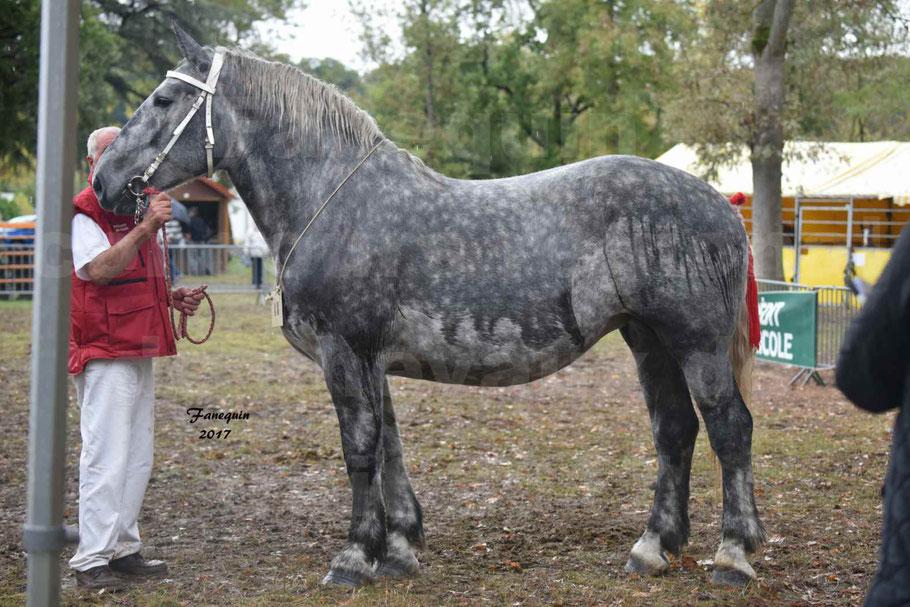 Concours Régional de chevaux de traits en 2017 - Pouliche Trait PERCHERON - ÉCAILLE DU RAMIER