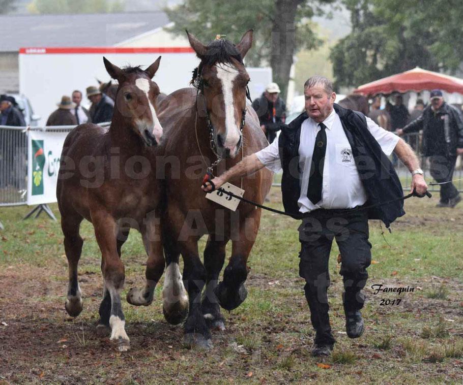Concours Régional de chevaux de traits en 2017 - Jument Suitée - Trait BRETON - UNION 11