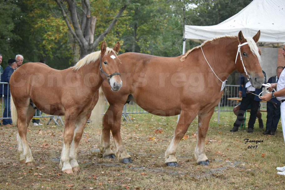 Concours Régional de chevaux de traits en 2017 - Jument & Poulain COMTOIS - BAILLA DU CLOS