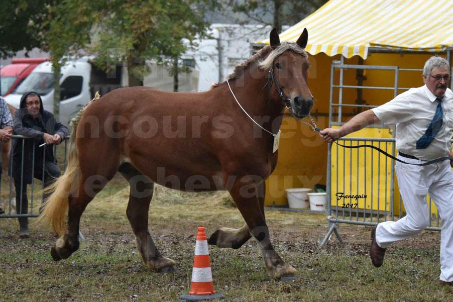 Concours Régional de chevaux de traits en 2017 - Pouliche Trait COMTOIS - DUCHESSE DE BENS
