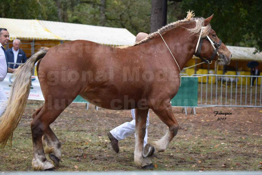 Concours Régional de chevaux de traits en 2017 - Trait COMTOIS - ERANIE DES RAYNAUDS