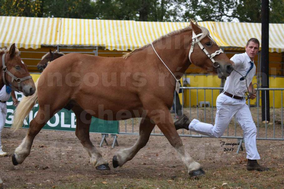 Concours Régional de chevaux de traits en 2017 - Jument & Poulain Trait COMTOIS - CANNELLE 9