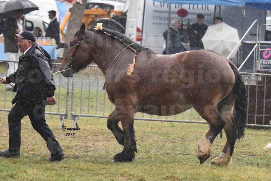 Concours Régional de chevaux de traits en 2017 - Trait BRETON  - EGLANTINE DE BENECHE