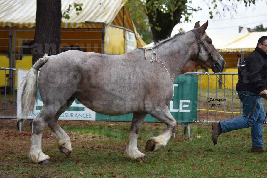 Concours Régional de chevaux de traits en 2017 - Cheval BRETON - BELLE DOUS MOULIS