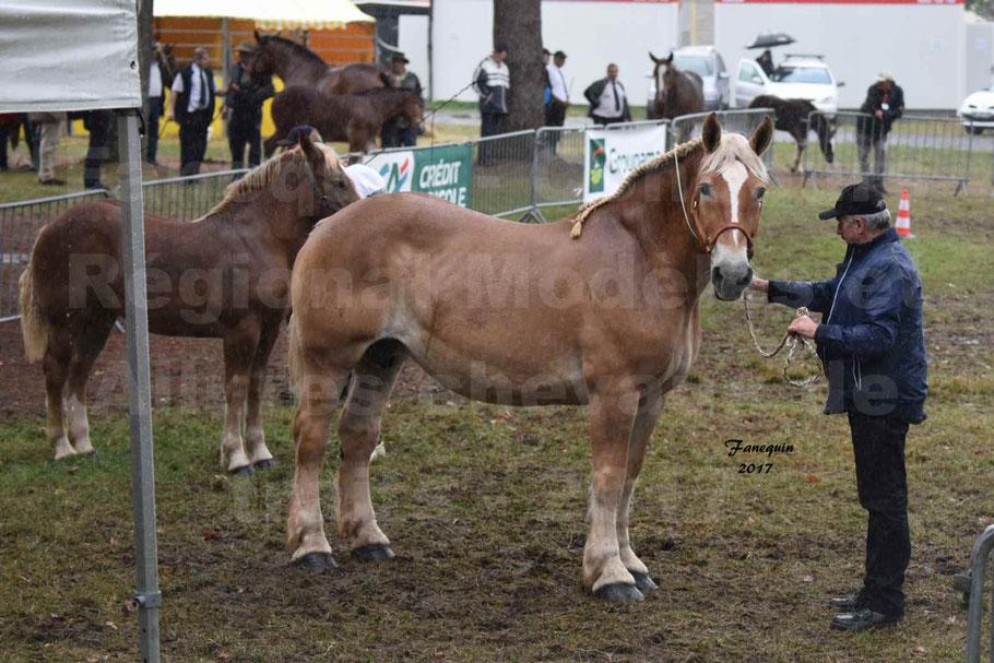 Concours Régional de chevaux de traits en 2017 - Trait BRETON - Jument suitée - OREE DES AMOUROUX