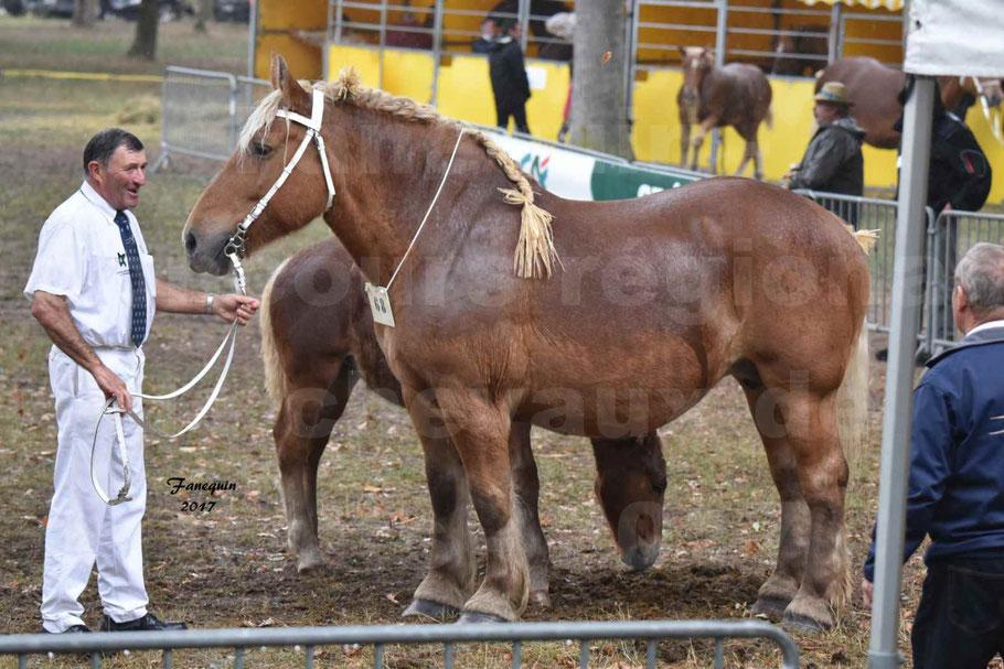 Concours Régional de chevaux de traits en 2017 - Jument suitée - Trait COMTOIS - SEGOLENE 3 -
