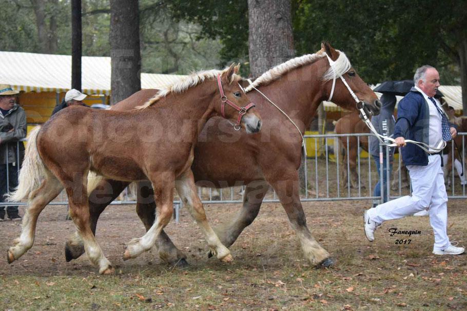 Concours Régional de chevaux de traits en 2017 - Jument Suitée - Trait COMTOIS - TOSCANE DE GIOUX