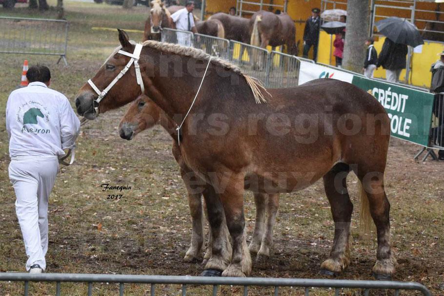 Concours Régional de chevaux de traits en 2017 - Trait COMTOIS - Jument suitée - RITA 38