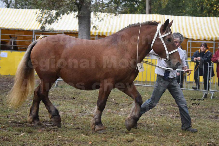 Concours Régional de chevaux de traits en 2017 - Trait COMTOIS - ESQUISSE DE VIELLE