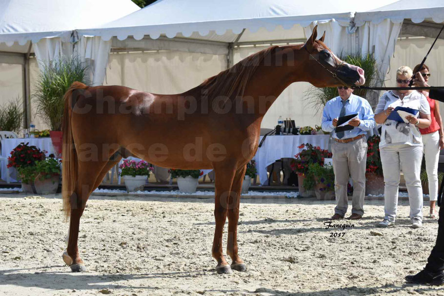 TCHAATA INIZIATO aux Championnat de FRANCE des chevaux ARABES de show à POMPADOUR en 2017