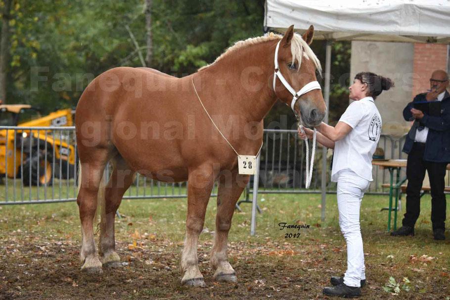 Concours Régional de chevaux de traits en 2017 - Trait COMTOIS - ETOILE 90