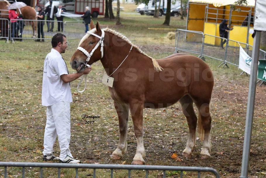 Concours Régional de chevaux de traits en 2017 - Trait COMTOIS - FAUVETTE DES BARDIS
