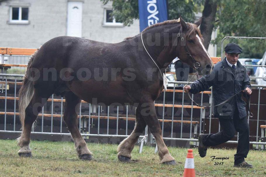 Concours Régional de chevaux de traits en 2017 - Jument Suitée - Trait BRETON - URIELLE DE LA MARGUE