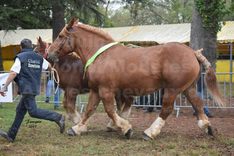 Concours Régional de chevaux de traits en 2017 - Trait BRETON - Jument suitée - ROYALE DE MARS