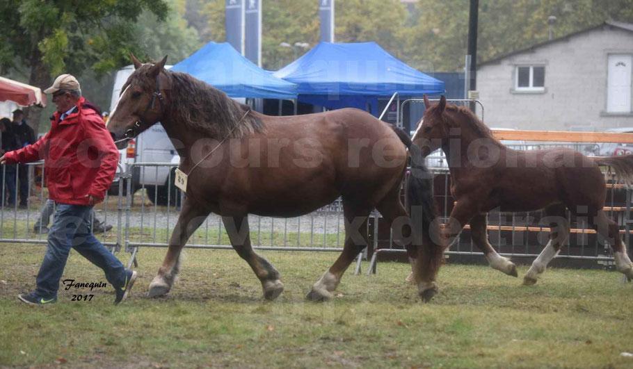 Concours Régional de chevaux de traits en 2017 - Jument Suitée - Trait BRETON - ULA DE BOUXOULIC