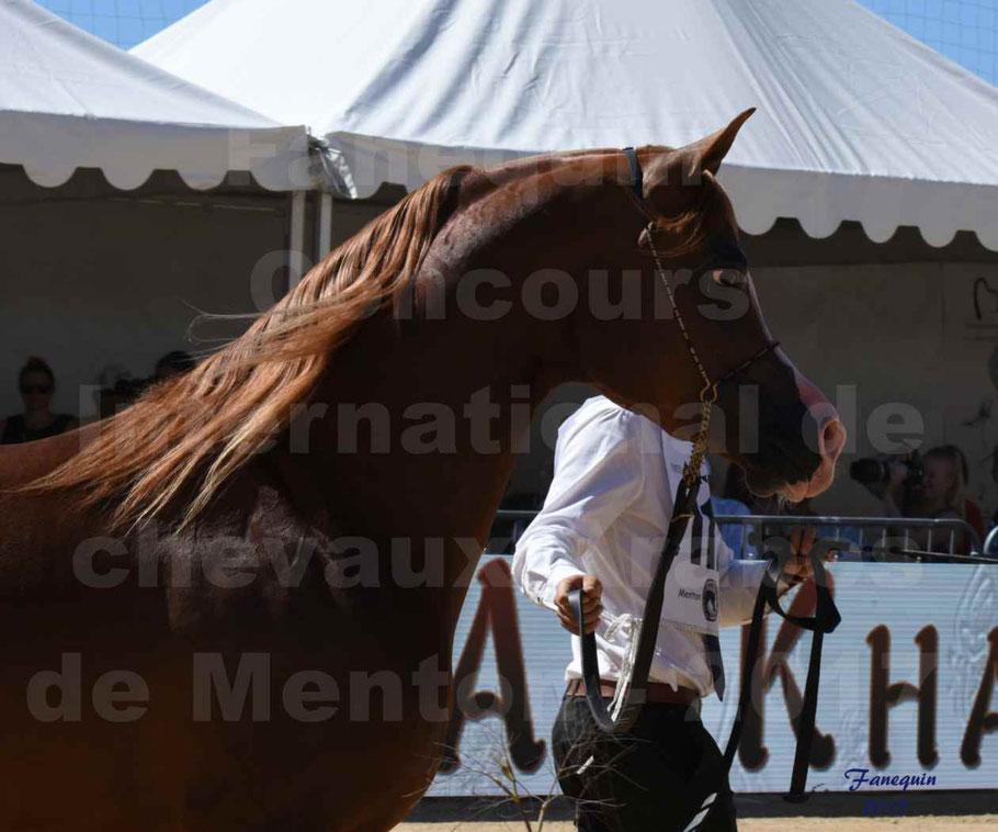 TCHAATA INIZIATO aux Concours International des chevaux ARABES de show à MENTON en 2017