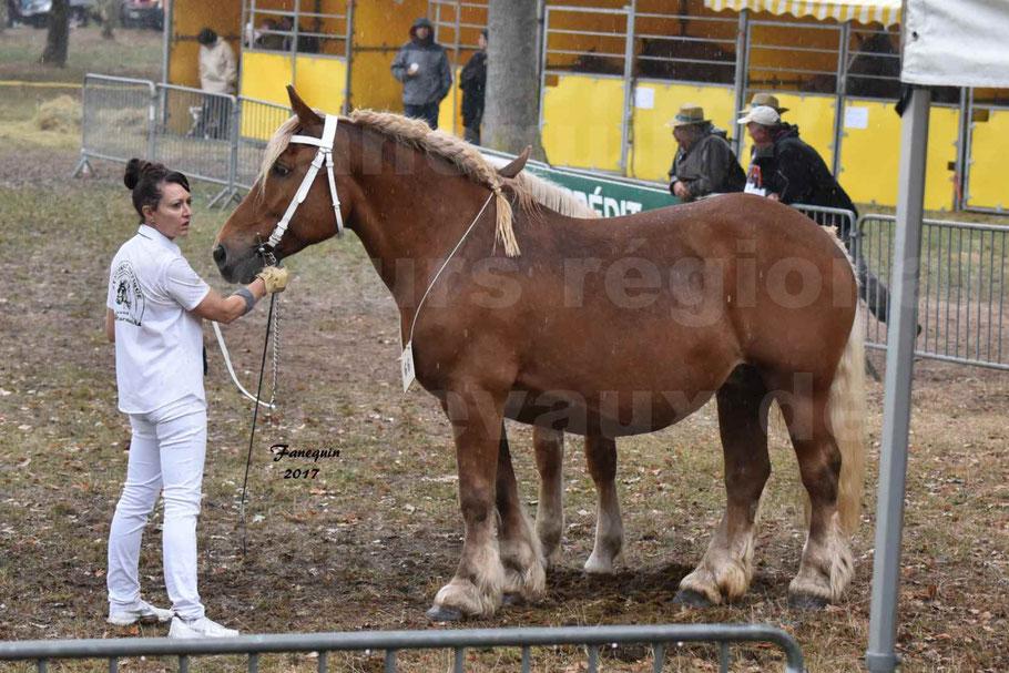 Concours Régional de chevaux de traits en 2017 - Trait COMTOIS - Jument suitée - ROXIE 7