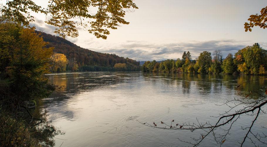 Der Rhein bei Rheinsulz. (Foto CC)