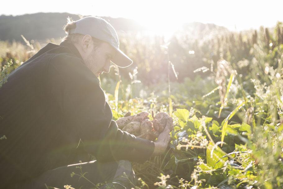 Bauer mit Süßkartoffeln im Gegenlicht