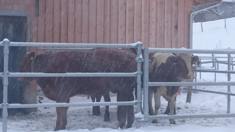 Geniesen auch im Winter den Auslauf ins Freie. Endlich ist der Schnee da