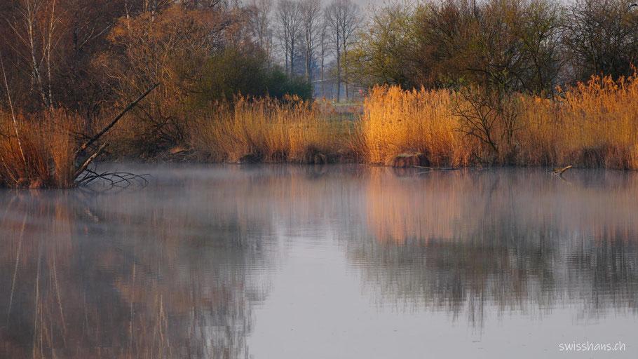 Teich mit Schilf und feinem Morgennebel