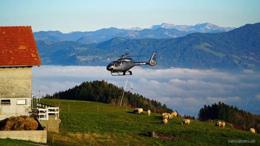 Helikopter landet auf dem St. Anton neben dem Stall mit den Schafen