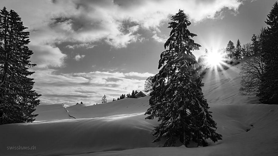 Winterlandschaft bei der Landmark mit verschneiter Tanne und Sonnenstern