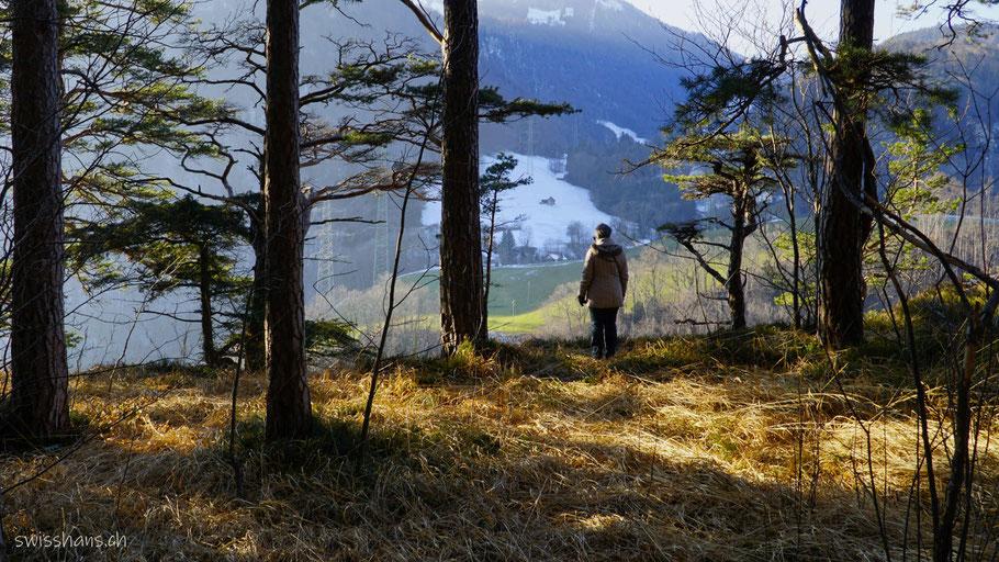 Wald mit verdorrtem Gras und Person, die hinausschaut