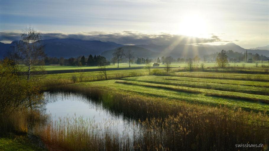 Rheintaler Rietlandschaft mit Teich und Schilf und Blick zu den Österreicher Bergen