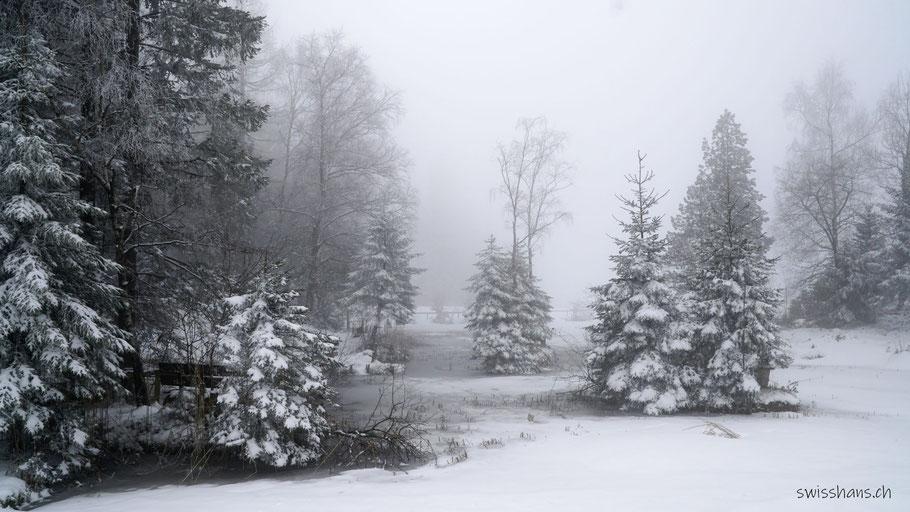 Winterlandschaft mit verschneiten Tannen beim Gäbrisseeli